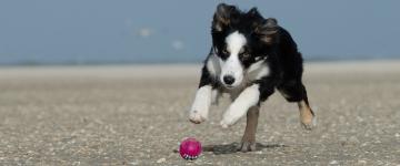 IMG Vacances en Sicile – Les plages pour chiens