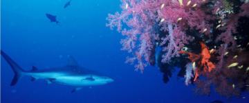 Plongée en Sicile – Zones et écoles de plongée